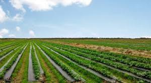 farmland 1