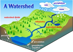 How water sheds work